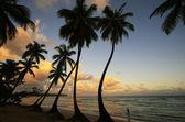 Las terrenas-strand bij zonsondergang, samana peninsula — Stockfoto
