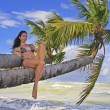 Stock Photo: Young woman in bikini sitting on palm trees