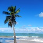 Leaning palm tree at Las Terrenas beach, Samana peninsula — Stock Photo #25577291