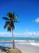 Leaning palm tree at Las Terrenas beach, Samana peninsula — Stock Photo