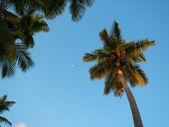 Palm trees at Las Terrenas beach, Samana peninsula — Stock Photo