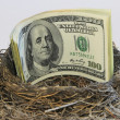 Dollar bills in a bird nest — Stock Photo