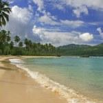Rincon beach, Samana peninsula — Stock Photo #25905303