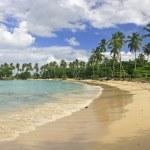 Rincon beach, Samana peninsula — Stock Photo #25906437