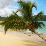 Leaning palm tree at Rincon beach, Samana peninsula — Stock Photo #25954321