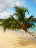 Leaning palm tree at Rincon beach, Samana peninsula — Stock Photo