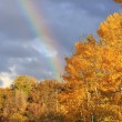 Stock Photo: Rainbow over aspen trees, Colorado