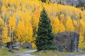 Yankee Boy Basin, Mount Sneffels wilderness, Colorado — Stock Photo