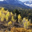 Dallas Divide, Uncompahgre National Forest, Colorado — ストック写真