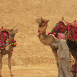 Bedouin with camels near Pyramid of Khafre, Cairo — Stock Photo #29706311