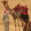Bedouin with camels near Pyramid of Khafre, Cairo — Stock Photo #29706315