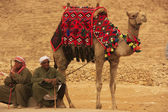 Bedouins resting near Pyramid of Khafre, Cairo, Egypt — Stock Photo