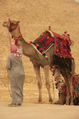 Bedouin with camels near Pyramid of Khafre, Cairo — Stock Photo