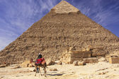 Bedouin on a camel near Pyramid of Khafre, Cairo — Stock Photo