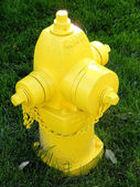 Yellow fire hydrant on green grass — Stock Photo