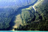 Avalanche path at Emerald Lake, Yoho National Park, Canada — Stock Photo