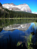 Lake O'Hara, Yoho National Park, British Columbia, Canada — Foto Stock