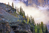 Low clouds above pine trees, Lake O'Hara, Yoho National Park, Ca — Stock Photo