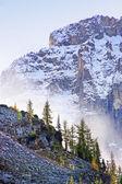 Lage wolken boven pijnbomen, lake o'hara, yoho Nationaalpark, ca — Stockfoto