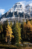 Mount Huber and Opabin Plateau, Yoho National Park, Canada — Stock Photo