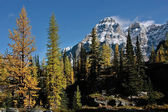 Mount Huber and Opabin Plateau, Yoho National Park, Canada — Photo