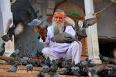Indian man feeding pigeons near holy lake, Pushkar, India — Foto de Stock