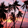 Silhouetted palm trees on a beach at sunset, Ofu island, Tonga — Stock Photo