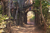 Entrance gate to Ranthambore National Park, India — Foto Stock