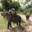 Unidentified tourists riding elephant in Samui jungle Thailand — 图库照片