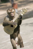 Monkey with guitar — Stock Photo