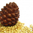 Cedar cones and pine nuts closeup — Stock Photo