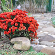 Landscaping at home, the trail of stone and red flowers — Stock Photo