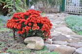 Landscaping at home, the trail of stone and red flowers — Стоковое фото