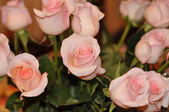 Holiday background with beautiful pink roses with bokeh — Stock Photo