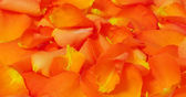 Orange fiery rose petals, texture, horizontal background — Stock Photo