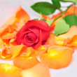 Red rose on orange petals with blurred background — Stock Photo