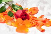 Sparkling red rose on orange petals with blurred background — Stock Photo