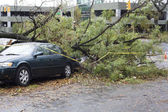 Tree falls on car — Stockfoto