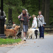 Early morning dog walkers in Central Park — Stock Photo
