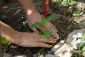 Young plant planted female hands — Stockfoto