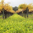 Vineyard — Stockfoto #13691578