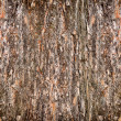 Stock Photo: Background from bark of pine-tree