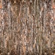 Background from the bark of pine-tree - Stock Photo