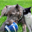 A dog and cat play a ball together — Stock Photo #12081743