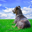 Stock Photo: Dog which looks far