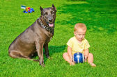 A child plays with a dog and ball on a grass — Stock Photo