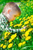 Beautiful little boy surrounded by dandelions chooses a flower — Stock Photo