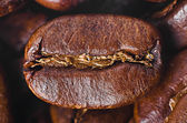 Grain of coffee close-up — Stock Photo