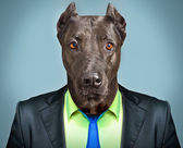 Portrait of a dog in a business suit — Stock Photo