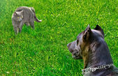 Cat was scared dog, looking at him — Stock Photo